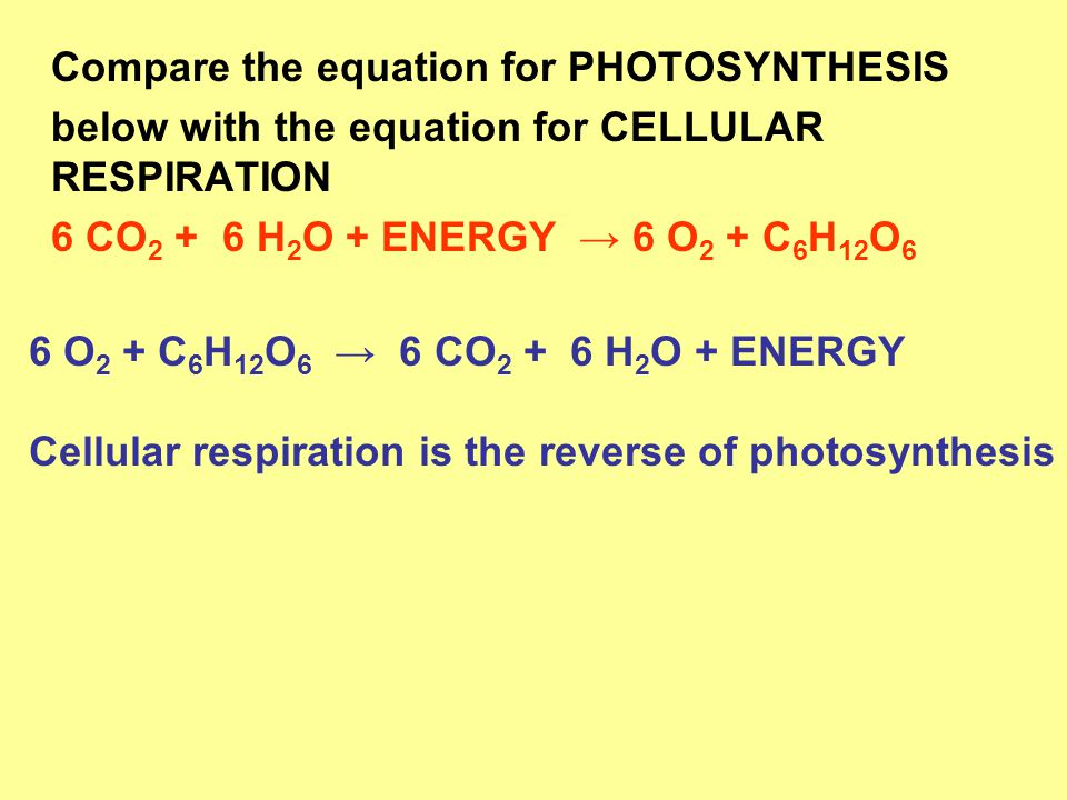 Compare the equation for PHOTOSYNTHESIS below with the equation for CELLULAR RESPIRATION 6 CO 2 + 6 H 2 O + ENERGY → 6 O 2 + C 6 H 12 O 6 6 O 2 + C 6