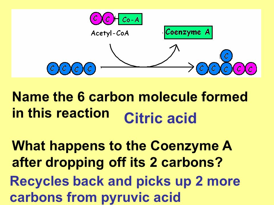 Name the 6 carbon molecule formed in this reaction What happens to the Coenzyme A after dropping off its 2 carbons? Citric acid Recycles back and pick