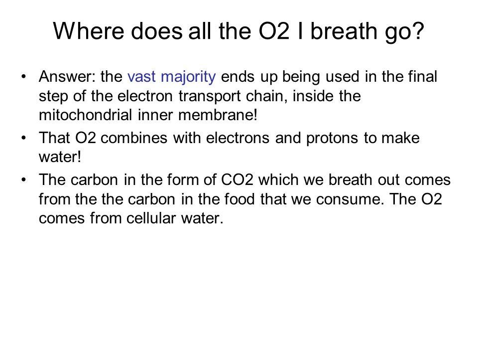 Where does all the O2 I breath go.