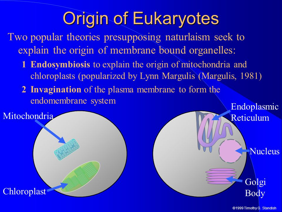 ©1999 Timothy G. Standish Origin of Eukaryotes Two popular theories presupposing naturlaism seek to explain the origin of membrane bound organelles: 1