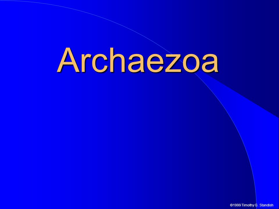 ©1999 Timothy G. Standish Archaezoa