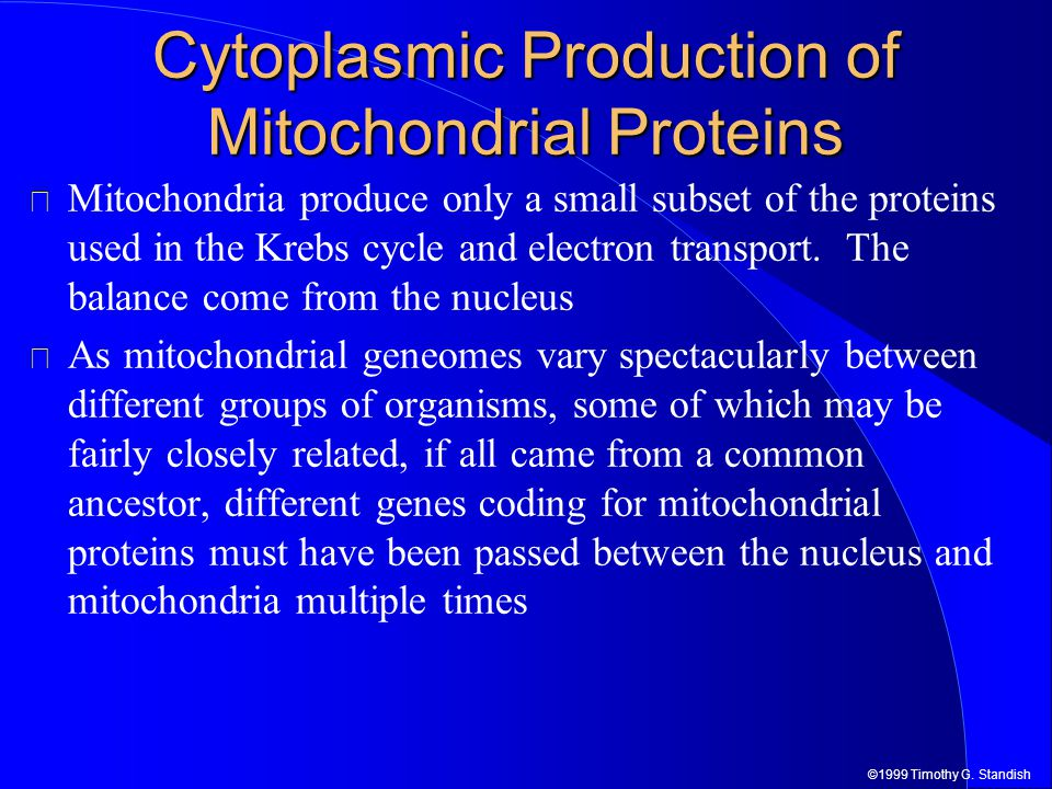 ©1999 Timothy G. Standish Cytoplasmic Production of Mitochondrial Proteins Mitochondria produce only a small subset of the proteins used in the Krebs