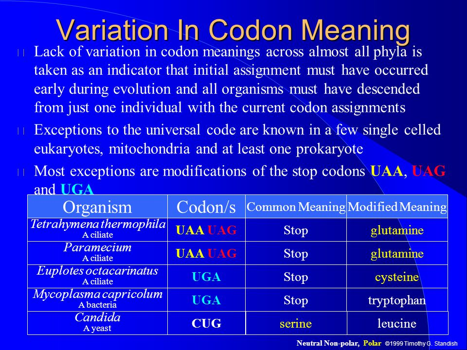 ©1999 Timothy G. Standish Variation In Codon Meaning Lack of variation in codon meanings across almost all phyla is taken as an indicator that initial