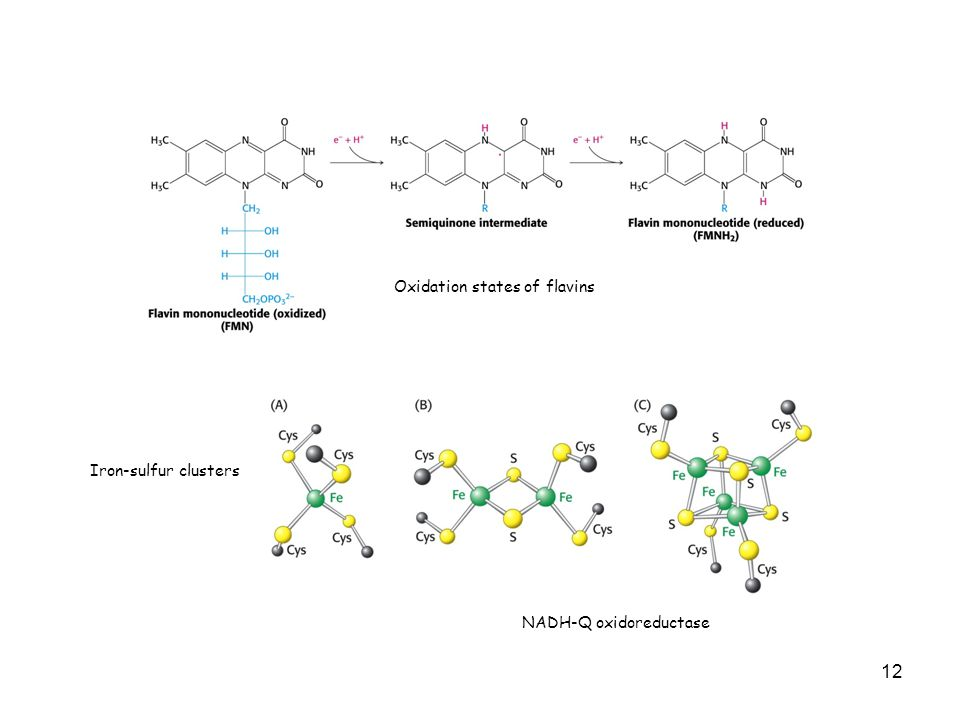 12 Oxidation states of flavins Iron-sulfur clusters NADH-Q oxidoreductase