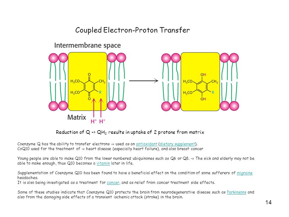 14 Coupled Electron-Proton Transfer Reduction of Q -> QH 2 results in uptake of 2 protons from matrix Coenzyme Q has the ability to transfer electrons -> used as an antioxidant (dietary supplement).antioxidantdietary supplement CoQ10 used for the treatment of -> heart disease (especially heart failure), and also breast cancer Young people are able to make Q10 from the lower numbered ubiquinones such as Q6 or Q8.