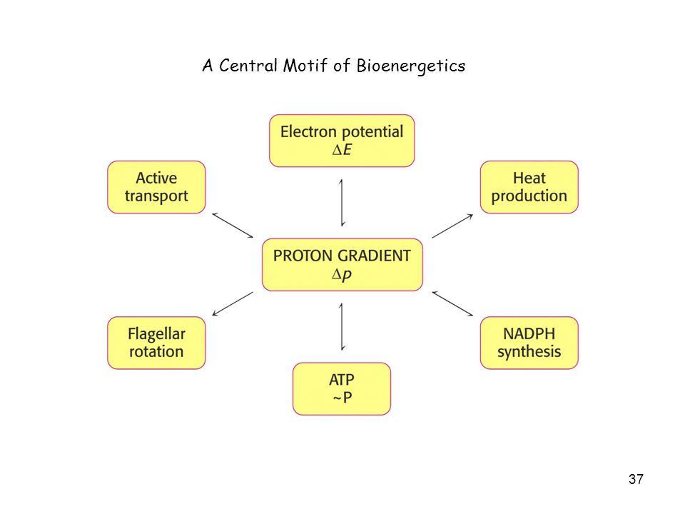 37 A Central Motif of Bioenergetics