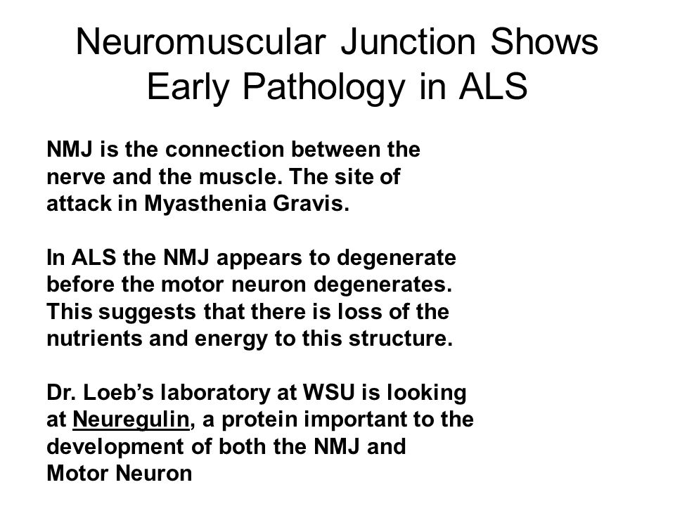 Neuromuscular Junction Shows Early Pathology in ALS NMJ is the connection between the nerve and the muscle.