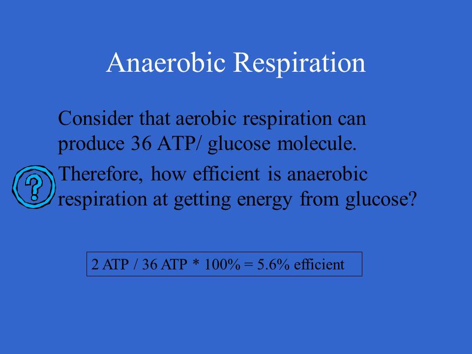 Anaerobic Respiration Consider that aerobic respiration can produce 36 ATP/ glucose molecule. Therefore, how efficient is anaerobic respiration at get