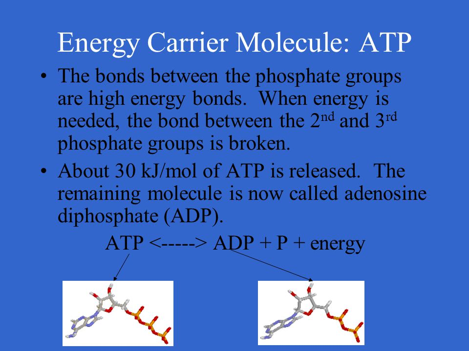 Energy Carrier Molecule: ATP The bonds between the phosphate groups are high energy bonds. When energy is needed, the bond between the 2 nd and 3 rd p