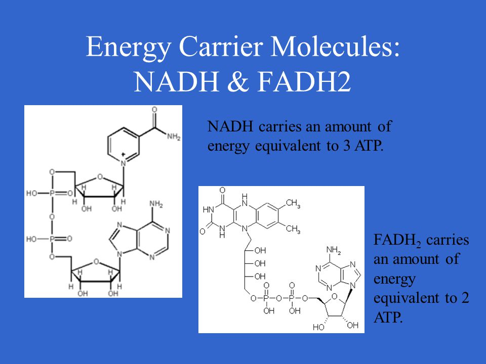 Energy Carrier Molecules: NADH & FADH2 NADH carries an amount of energy equivalent to 3 ATP. FADH 2 carries an amount of energy equivalent to 2 ATP.