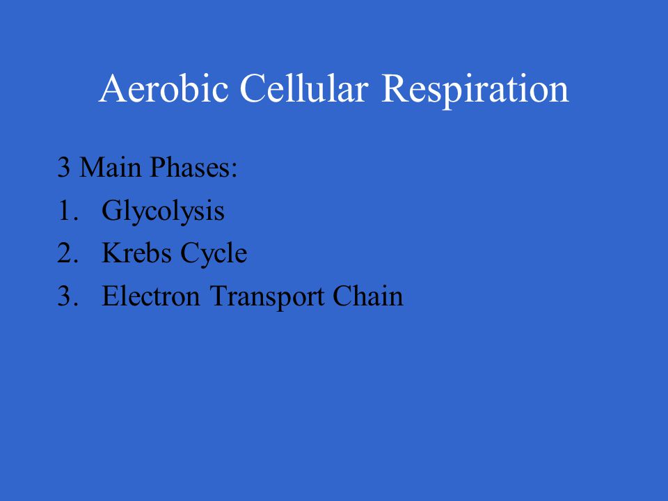 Aerobic Cellular Respiration 3 Main Phases: 1.Glycolysis 2.Krebs Cycle 3.Electron Transport Chain