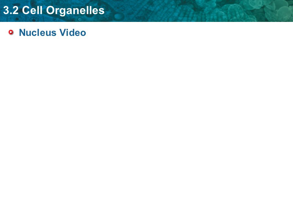 3.2 Cell Organelles Nucleus Video