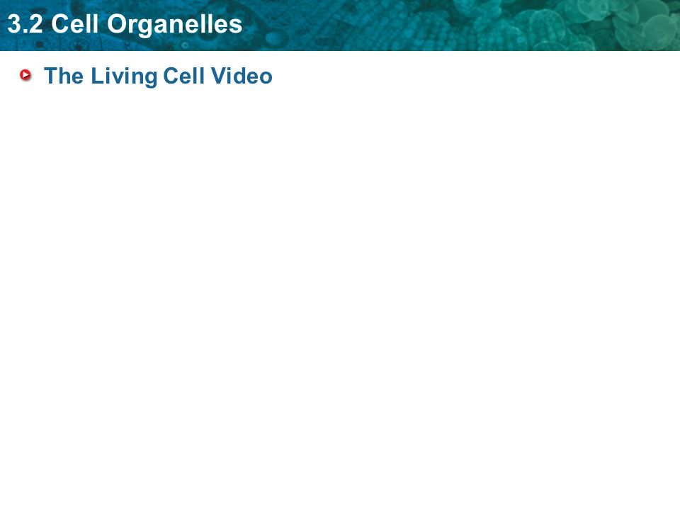 3.2 Cell Organelles The Living Cell Video