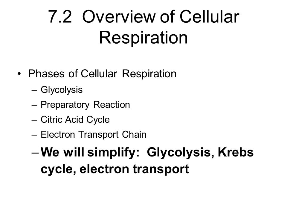 7.2 Overview of Cellular Respiration Phases of Cellular Respiration –Glycolysis –Preparatory Reaction –Citric Acid Cycle –Electron Transport Chain –We will simplify: Glycolysis, Krebs cycle, electron transport