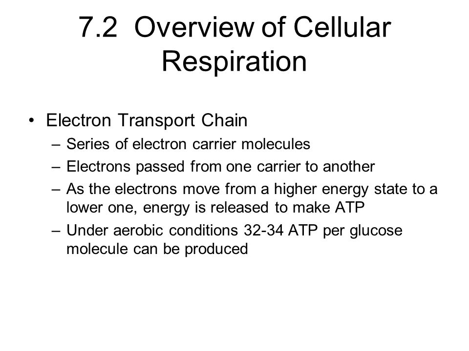 7.2 Overview of Cellular Respiration Electron Transport Chain –Series of electron carrier molecules –Electrons passed from one carrier to another –As the electrons move from a higher energy state to a lower one, energy is released to make ATP –Under aerobic conditions 32-34 ATP per glucose molecule can be produced