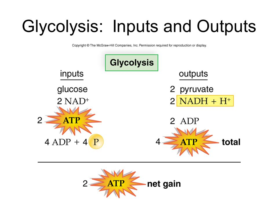 Glycolysis: Inputs and Outputs