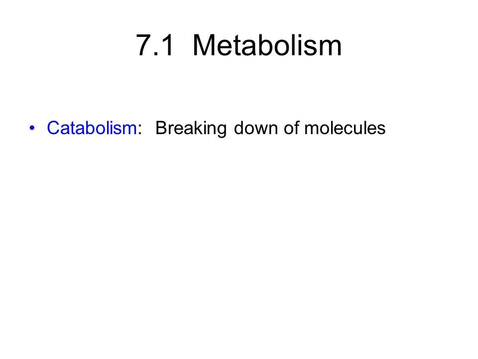 Catabolism: Breaking down of molecules