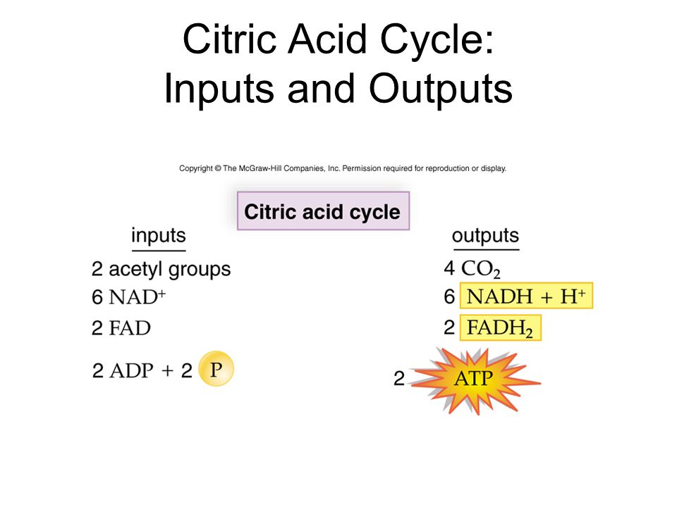 Citric Acid Cycle: Inputs and Outputs