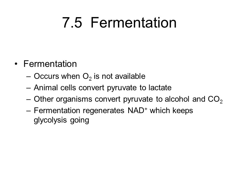 7.5 Fermentation Fermentation –Occurs when O 2 is not available –Animal cells convert pyruvate to lactate –Other organisms convert pyruvate to alcohol and CO 2 –Fermentation regenerates NAD + which keeps glycolysis going