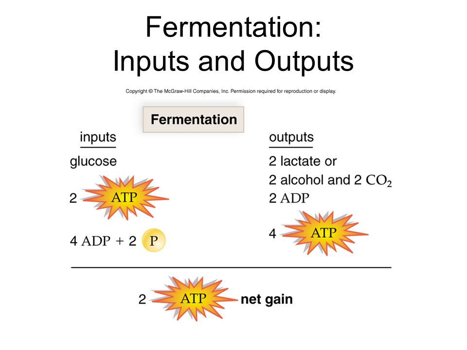 Fermentation: Inputs and Outputs