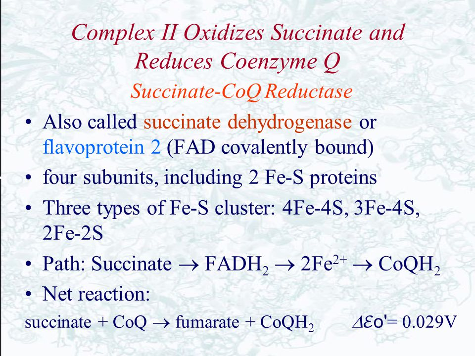 Complex II Oxidizes Succinate and Reduces Coenzyme Q Succinate-CoQ Reductase Also called succinate dehydrogenase or flavoprotein 2 (FAD covalently bou