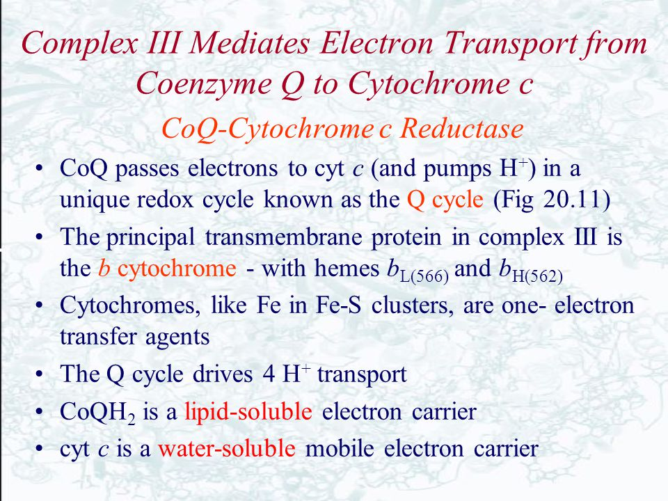 Complex III Mediates Electron Transport from Coenzyme Q to Cytochrome c CoQ-Cytochrome c Reductase CoQ passes electrons to cyt c (and pumps H + ) in a