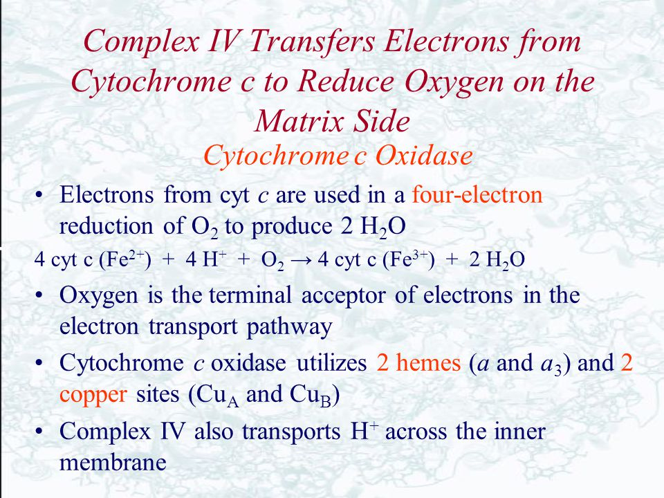 Complex IV Transfers Electrons from Cytochrome c to Reduce Oxygen on the Matrix Side Cytochrome c Oxidase Electrons from cyt c are used in a four-elec