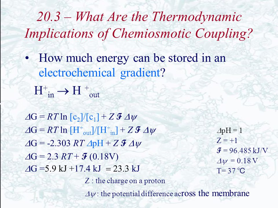 20.3 – What Are the Thermodynamic Implications of Chemiosmotic Coupling? How much energy can be stored in an electrochemical gradient? H + in  H + ou