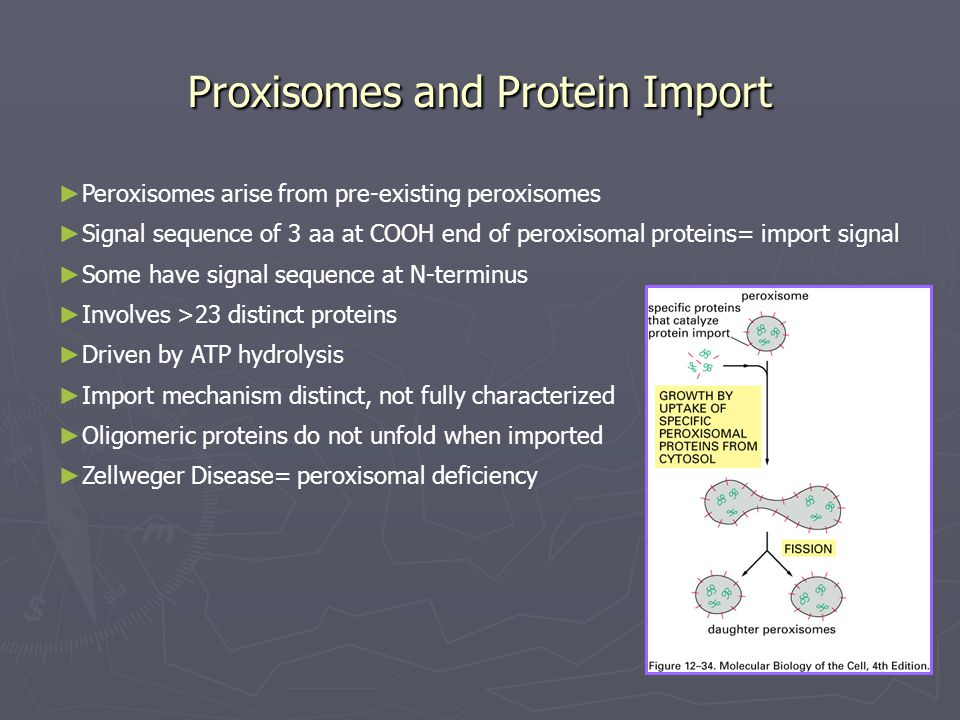 Proxisomes and Protein Import ► Peroxisomes arise from pre-existing peroxisomes ► Signal sequence of 3 aa at COOH end of peroxisomal proteins= import