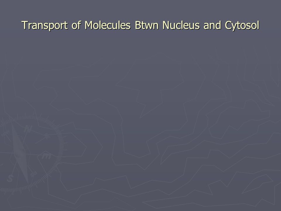 Transport of Molecules Btwn Nucleus and Cytosol