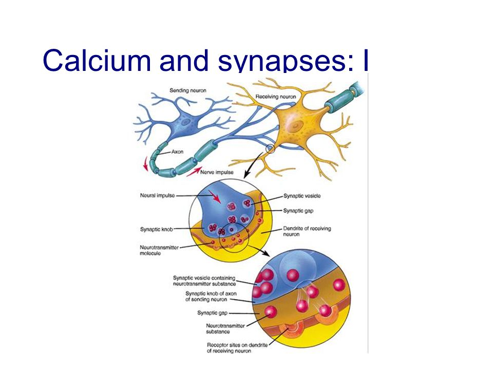 Calcium and synapses: II