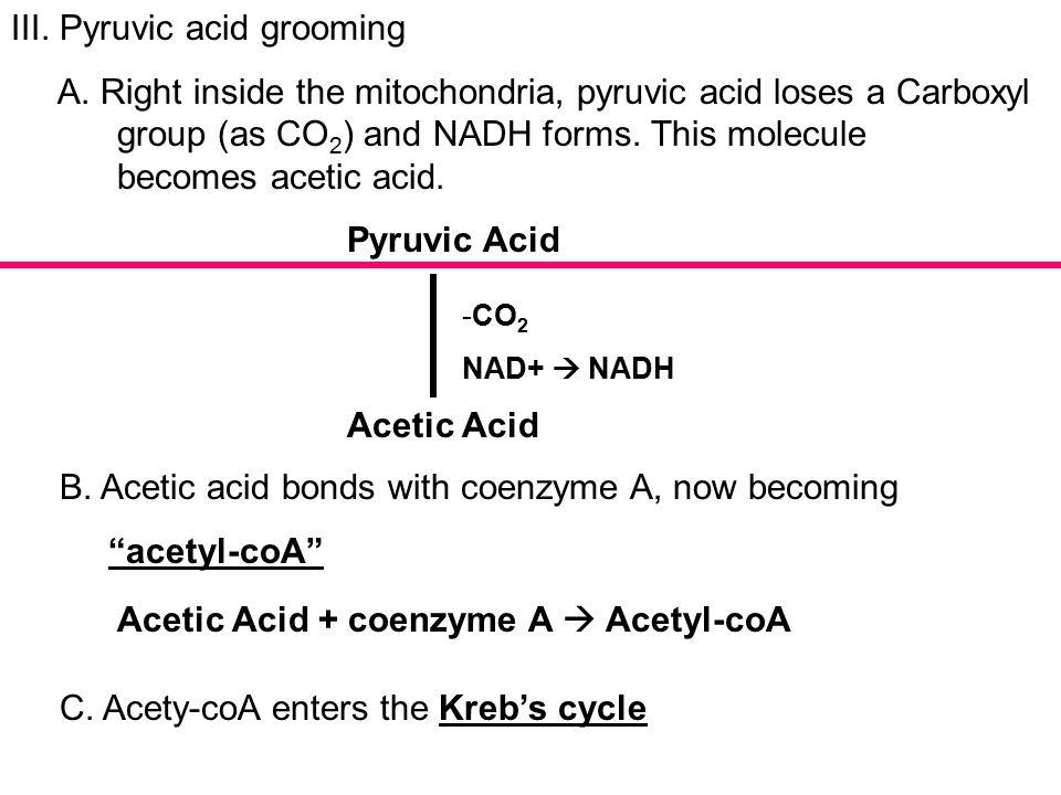 III. Pyruvic acid grooming A.