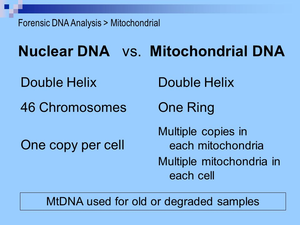 Nuclear DNA vs. Mitochondrial DNA Double Helix One copy per cell Multiple copies in each mitochondria Multiple mitochondria in each cell One Ring46 Ch
