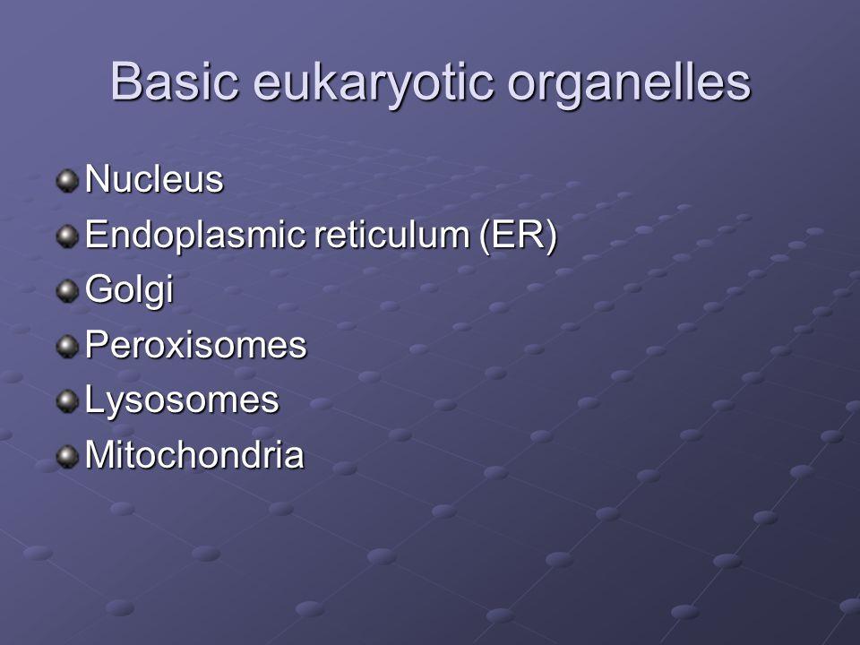 Basic eukaryotic organelles Nucleus Endoplasmic reticulum (ER) GolgiPeroxisomesLysosomesMitochondria