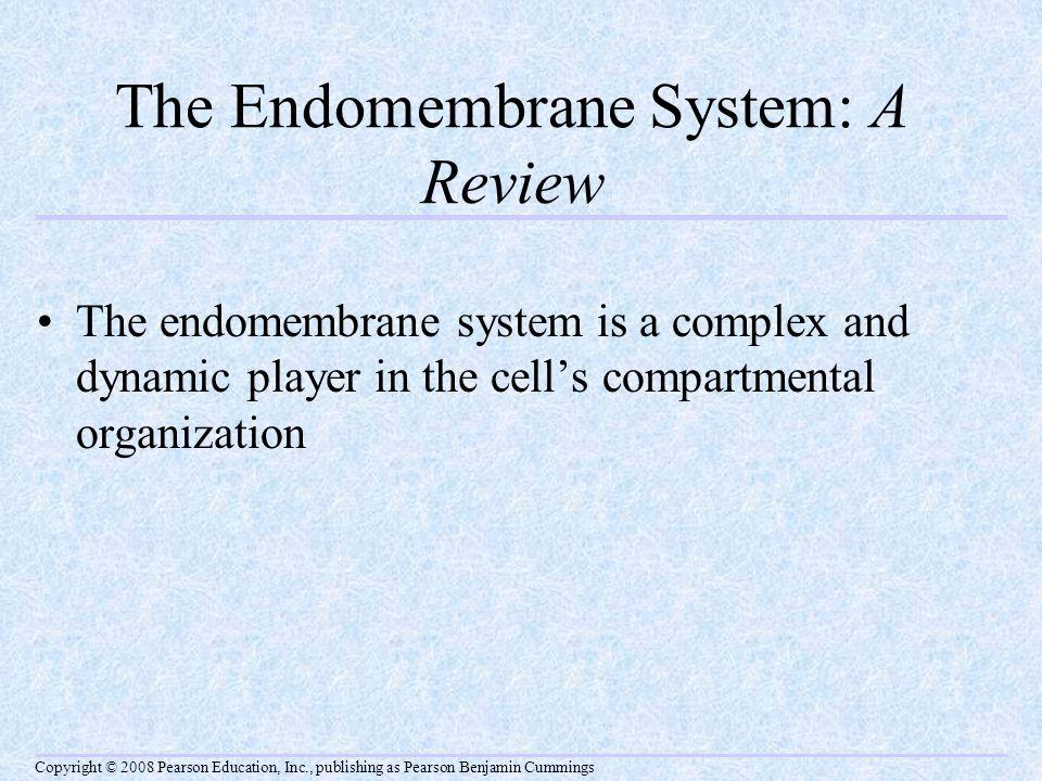 Fig. 6-16-1 Smooth ER Nucleus Rough ER Plasma membrane