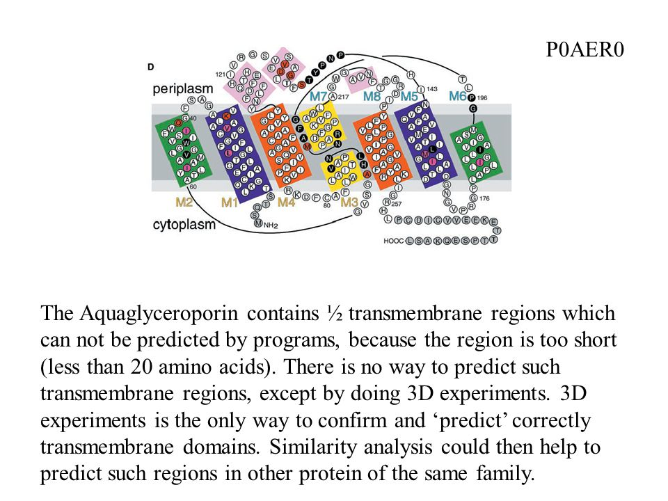 The Aquaglyceroporin contains ½ transmembrane regions which can not be predicted by programs, because the region is too short (less than 20 amino acids).