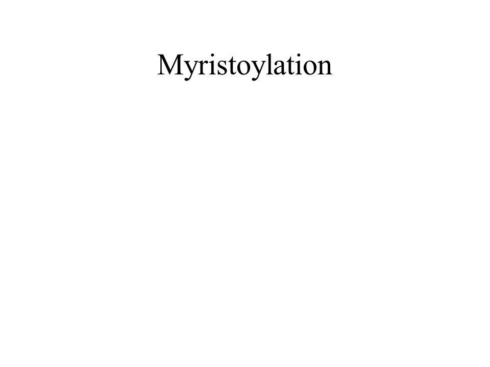 Myristoylation