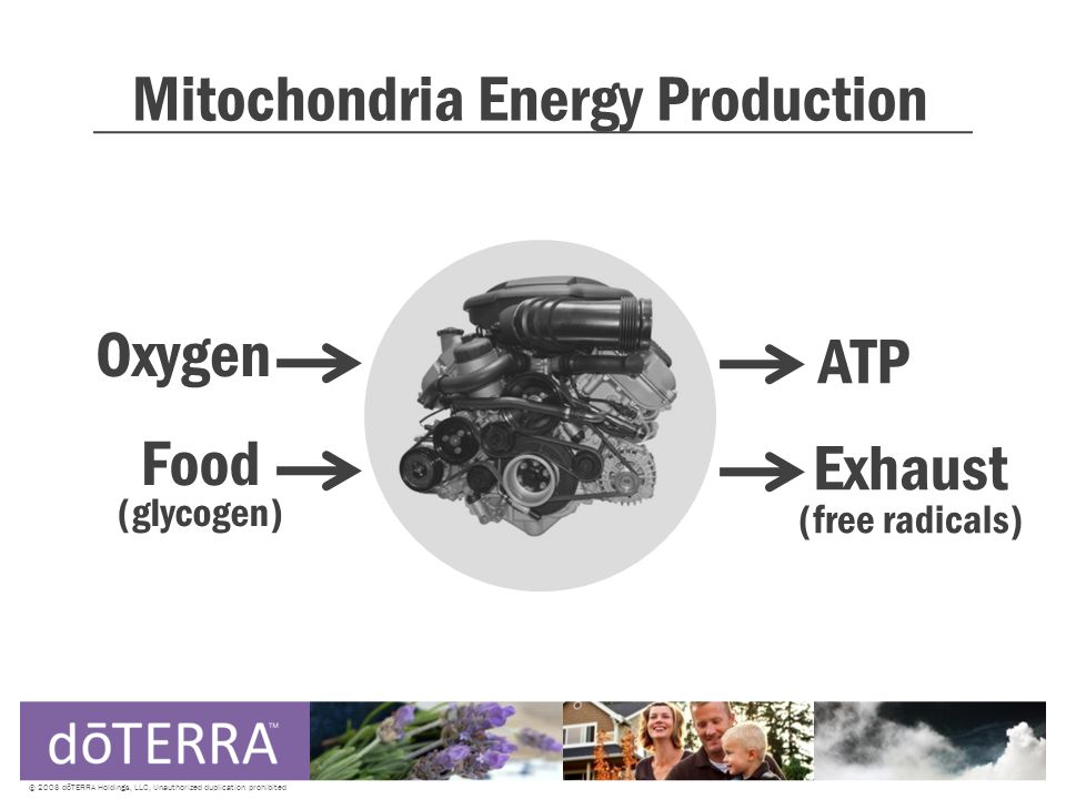 Mitochondria Energy Production © 2008 dōTERRA Holdings, LLC, Unauthorized duplication prohibited Oxygen Food (glycogen) ATP Exhaust (free radicals)