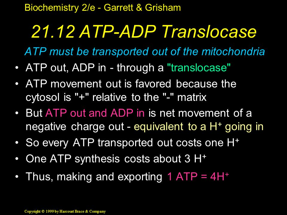 Biochemistry 2/e - Garrett & Grisham Copyright © 1999 by Harcourt Brace & Company 21.12 ATP-ADP Translocase ATP must be transported out of the mitochondria ATP out, ADP in - through a translocase ATP movement out is favored because the cytosol is + relative to the - matrix But ATP out and ADP in is net movement of a negative charge out - equivalent to a H + going in So every ATP transported out costs one H + One ATP synthesis costs about 3 H + Thus, making and exporting 1 ATP = 4H +