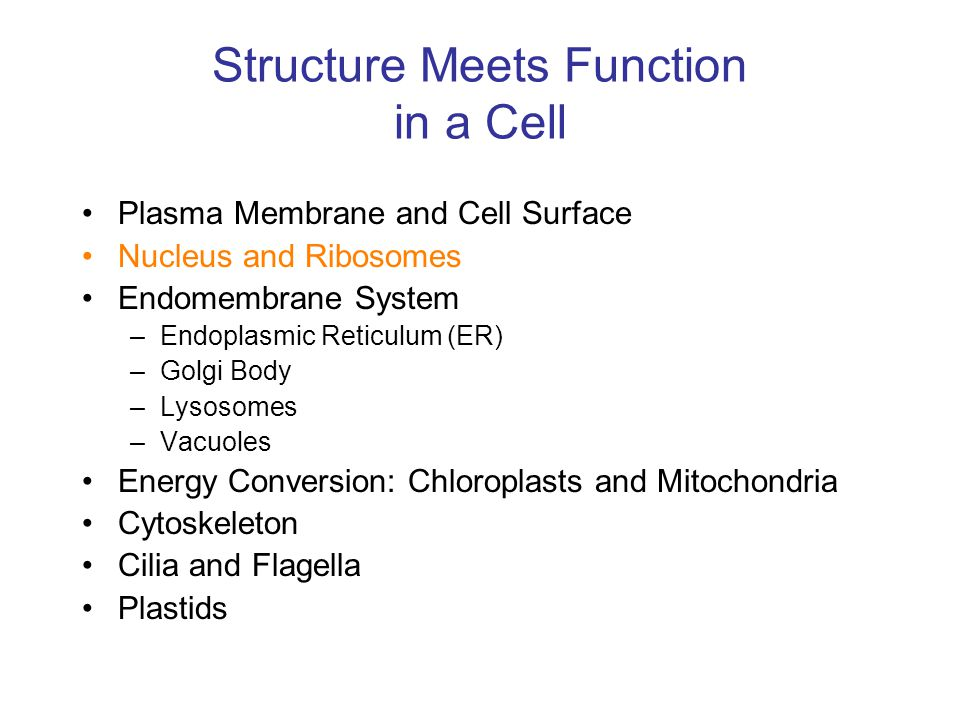 Structure Meets Function in a Cell Plasma Membrane and Cell Surface Nucleus and Ribosomes Endomembrane System –Endoplasmic Reticulum (ER) –Golgi Body –Lysosomes –Vacuoles Energy Conversion: Chloroplasts and Mitochondria Cytoskeleton Cilia and Flagella Plastids