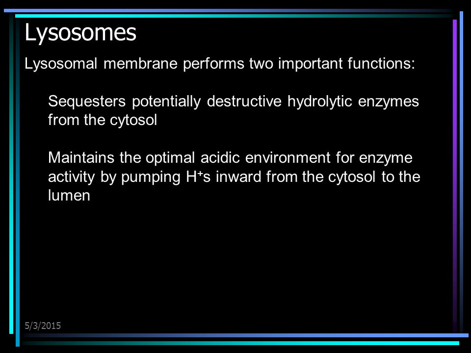 5/3/2015 Lysosomes Lysosomal membrane performs two important functions: Sequesters potentially destructive hydrolytic enzymes from the cytosol Maintai