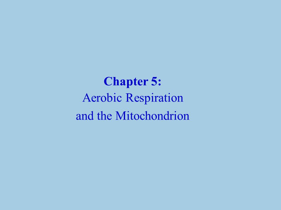 Chapter 5: Aerobic Respiration and the Mitochondrion