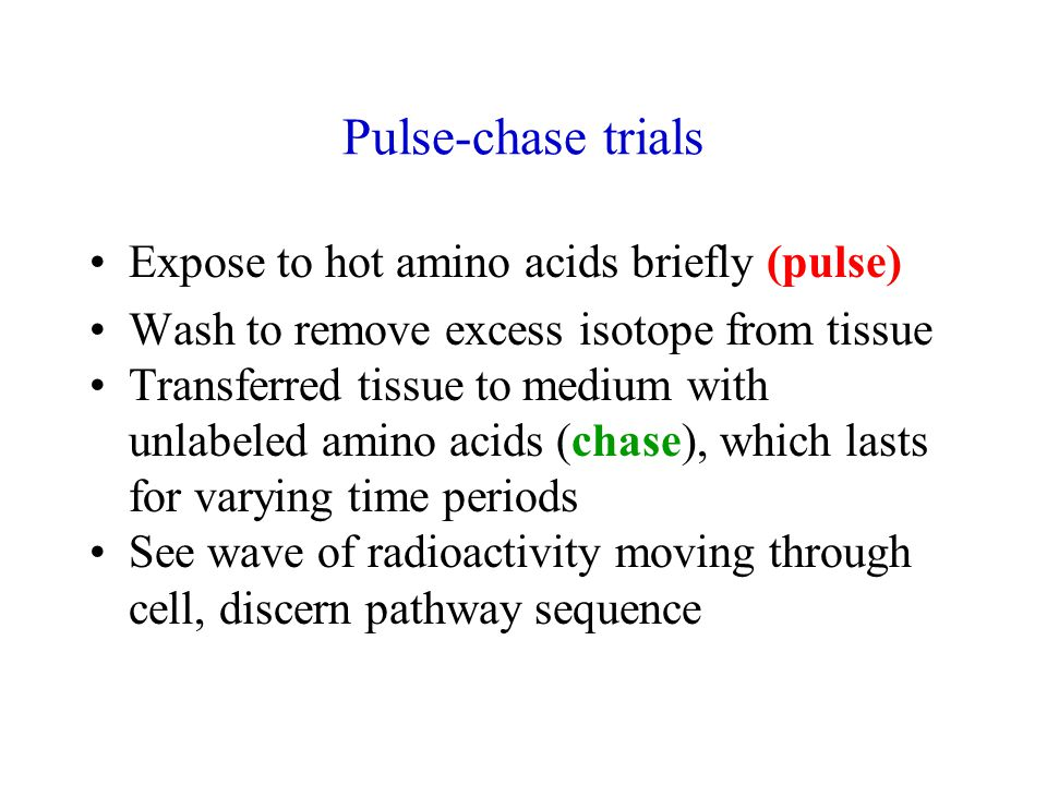 Pulse-chase trials Expose to hot amino acids briefly (pulse) Wash to remove excess isotope from tissue Transferred tissue to medium with unlabeled amino acids (chase), which lasts for varying time periods See wave of radioactivity moving through cell, discern pathway sequence