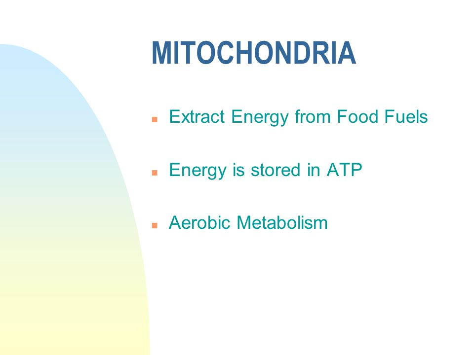 MITOCHONDRIA n Extract Energy from Food Fuels n Energy is stored in ATP n Aerobic Metabolism