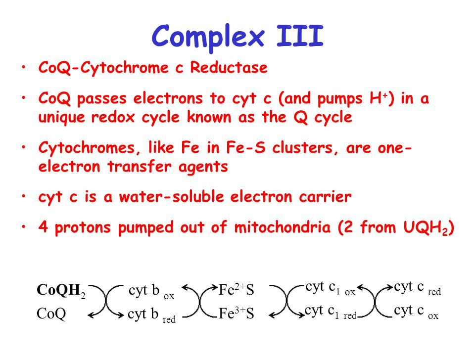 Complex III CoQ-Cytochrome c Reductase CoQ passes electrons to cyt c (and pumps H + ) in a unique redox cycle known as the Q cycle Cytochromes, like Fe in Fe-S clusters, are one- electron transfer agents cyt c is a water-soluble electron carrier 4 protons pumped out of mitochondria (2 from UQH 2 ) CoQH 2 cyt b ox Fe 2+ S cyt c 1 ox cyt c red CoQcyt b red Fe 3+ S cyt c 1 red cyt c ox