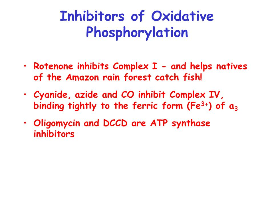 Inhibitors of Oxidative Phosphorylation Rotenone inhibits Complex I - and helps natives of the Amazon rain forest catch fish.