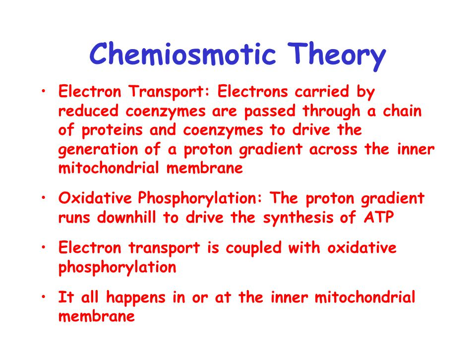 Chemiosmotic Theory Electron Transport: Electrons carried by reduced coenzymes are passed through a chain of proteins and coenzymes to drive the generation of a proton gradient across the inner mitochondrial membrane Oxidative Phosphorylation: The proton gradient runs downhill to drive the synthesis of ATP Electron transport is coupled with oxidative phosphorylation It all happens in or at the inner mitochondrial membrane