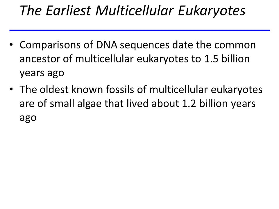 The Earliest Multicellular Eukaryotes Comparisons of DNA sequences date the common ancestor of multicellular eukaryotes to 1.5 billion years ago The o