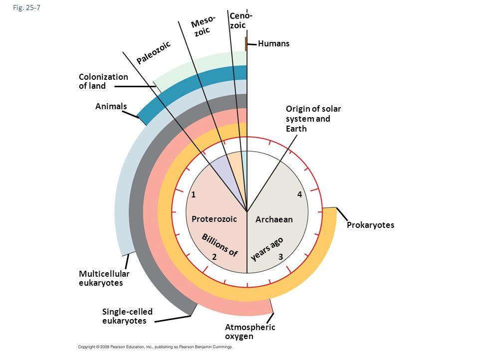 Fig. 25-9-2 Aerobic heterotrophic prokaryote Mitochondrion Ancestral heterotrophic eukaryote
