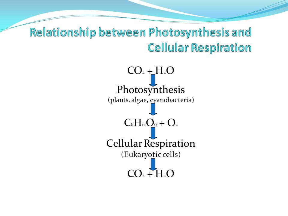 CO 2 + H 2 O Photosynthesis (plants, algae, cyanobacteria) C 6 H 12 O 6 + O 2 Cellular Respiration (Eukaryotic cells) CO 2 + H 2 O